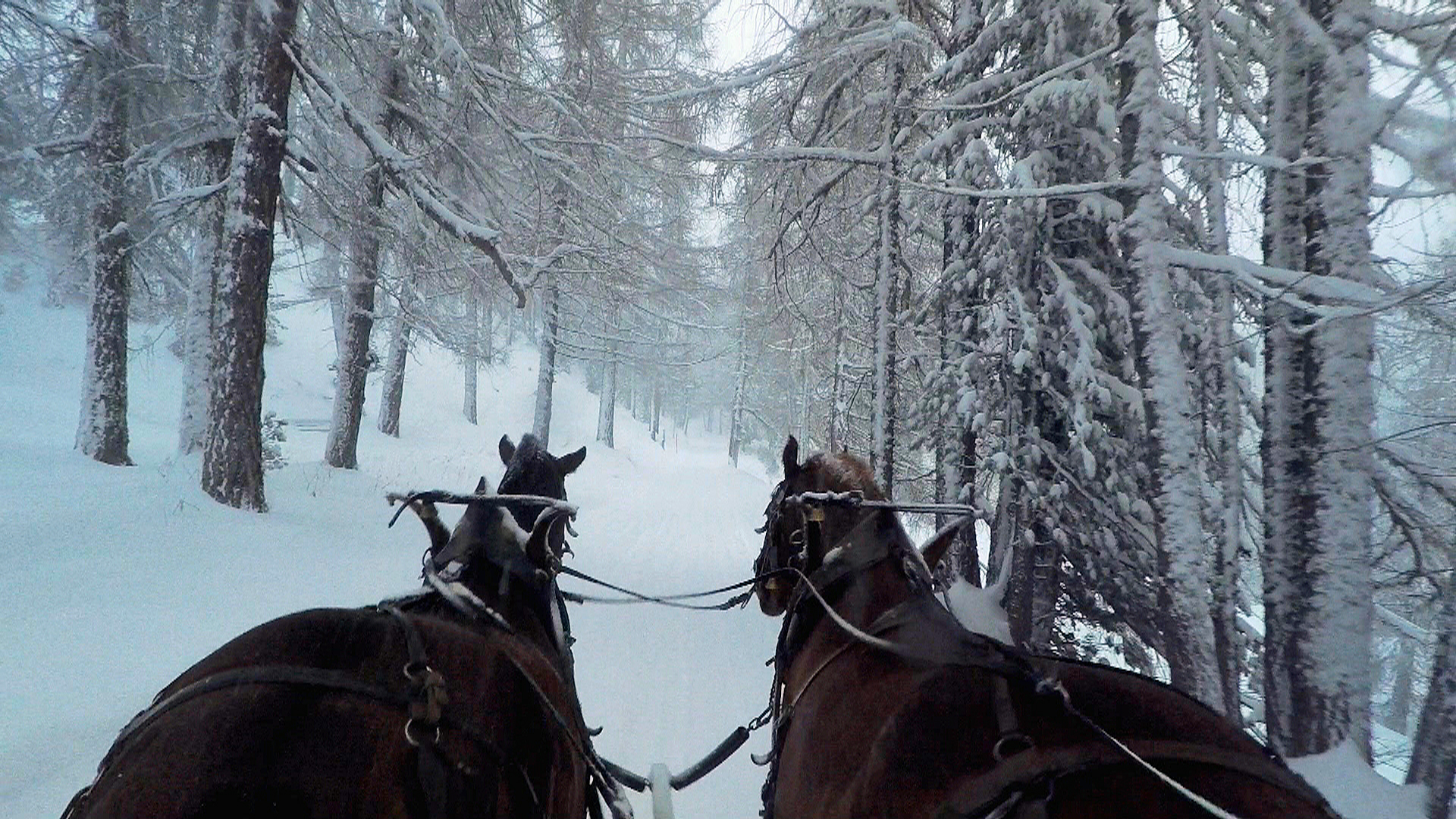 Horses pulling carriage in snow